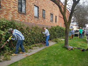 A group of people do yard work to trip and clean up a hedge beside a building on the sidewalk.